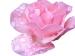 Design - Rose im Regen - by Zwecke, read more about this textile design